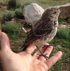 1. jave bird 5