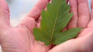 1. vein of a leaf