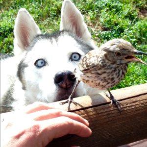 2. jave bird together