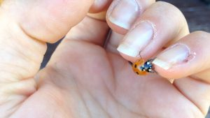 7.ladybug crossing fingers